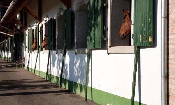Abbázia Country Club - Márokföld - 36