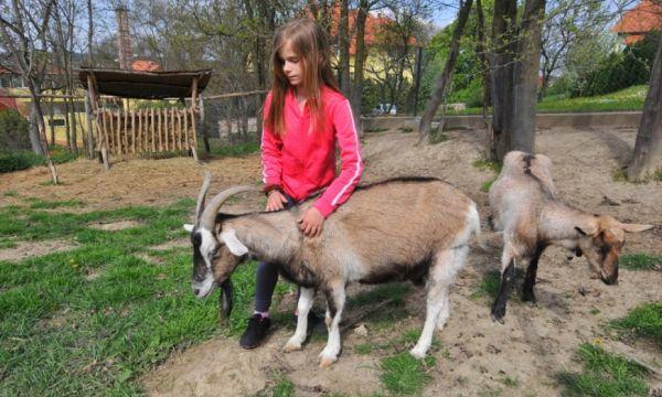 Fried Kastélyszálló Resort - Simontornya - Az állatsimogató