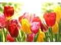 Fried Kastélyszálló Resort - Tavaszi Felfrissülés - Hétköznap